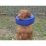 Kép 2/3 - Andrea védőgallér kutyán